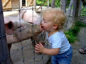 kid-and-pig